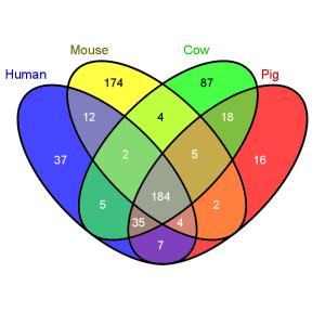 Venn diagram to show similarity between human, mouse, cow and pig immune genes. Humans and pigs share 42 genes that aren't found in mice, whilst mice and humans share 14 genes not found in pigs