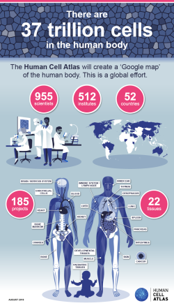 human-cell-atlas-infographic-6_Aug UPDATED