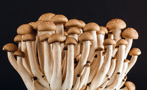 Don't dismiss fungi - there are nearly 2-3.3 million different species, and they are vital for healthy ecosystems