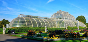 Botanic gardens - such as Darwin Tree of Life Project partner Kew Gardens - contain approx 1/3rd of all plant life on earth